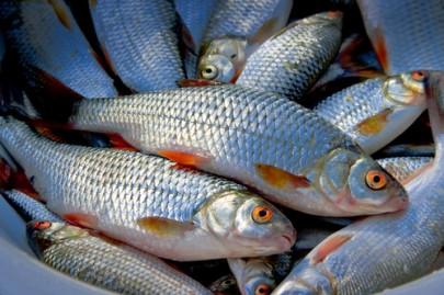 Зберігання спійманої риби
