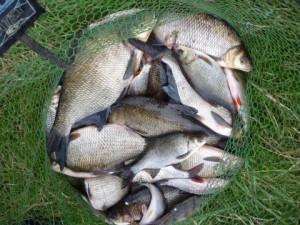 Вплив різноманітних факторів на клювання риби