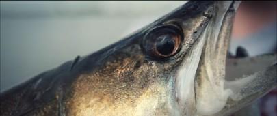Ловля хижої риби на фідер (відео з Олексієм Фадєєвим )