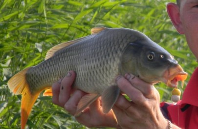 Рослинні насадки для ловлі риби (відео від братів Щербакових)
