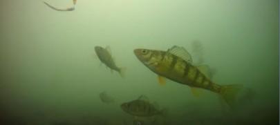Зимова рибалка на озері Сен Клер (відео)